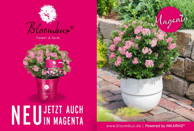 Bloombux (Anzeige)