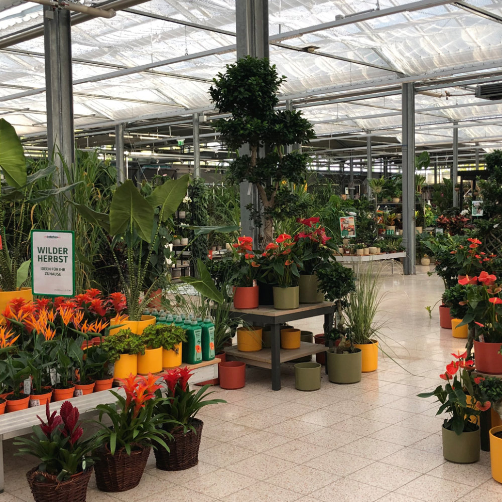 Indoor Gardening: Auch hier spielen wir die Jahreszeiten, um stetig neue Begehrlichkeiten zu schüren. (bellaflora, Österreich). Foto: Antje Verstl