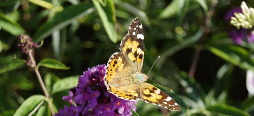 Nachhaltige Gärten bieten Insekten Nahrung. Foto: GABOT