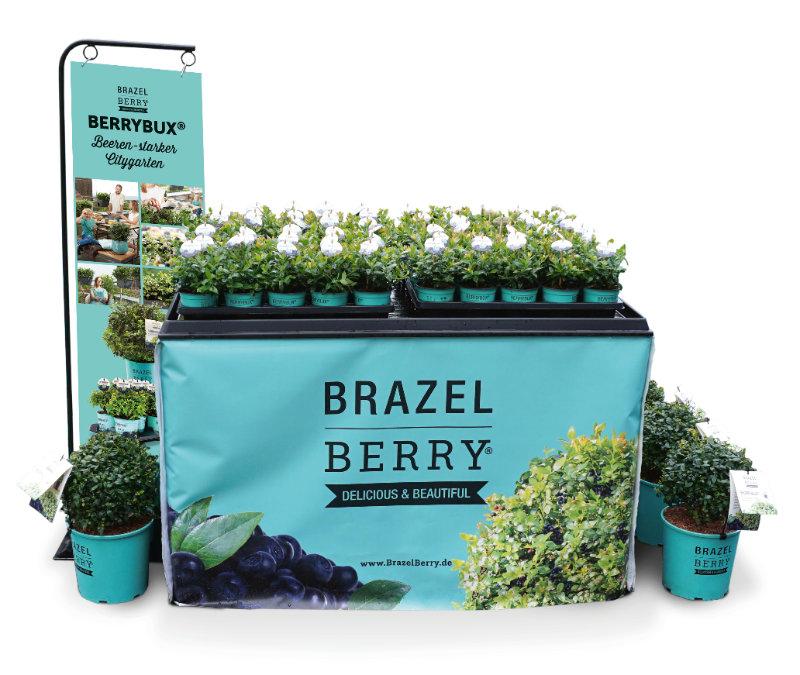 BerryBux®. Foto: Baumschule zu Jeddeloh Pflanzen